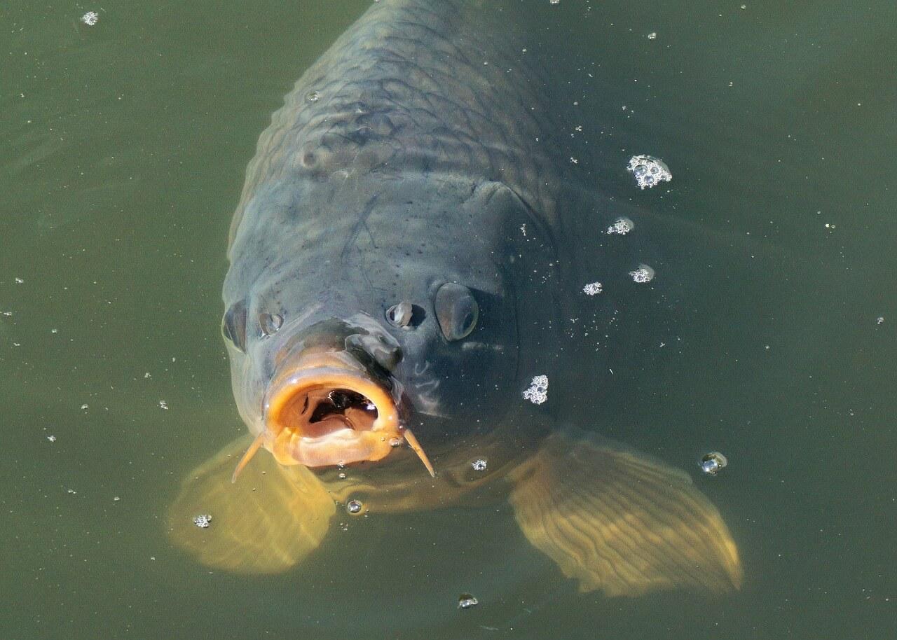 Achte auf die Wassertemperatur für Deine Teichfische