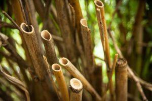 Sehr beliebt sind Gartenmöbel aus Bambus