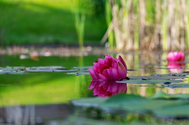 Hydrokulturpflanzen für den Garteneich