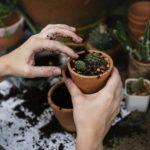 Garten richtig pflegen mit der Gartenarbeit