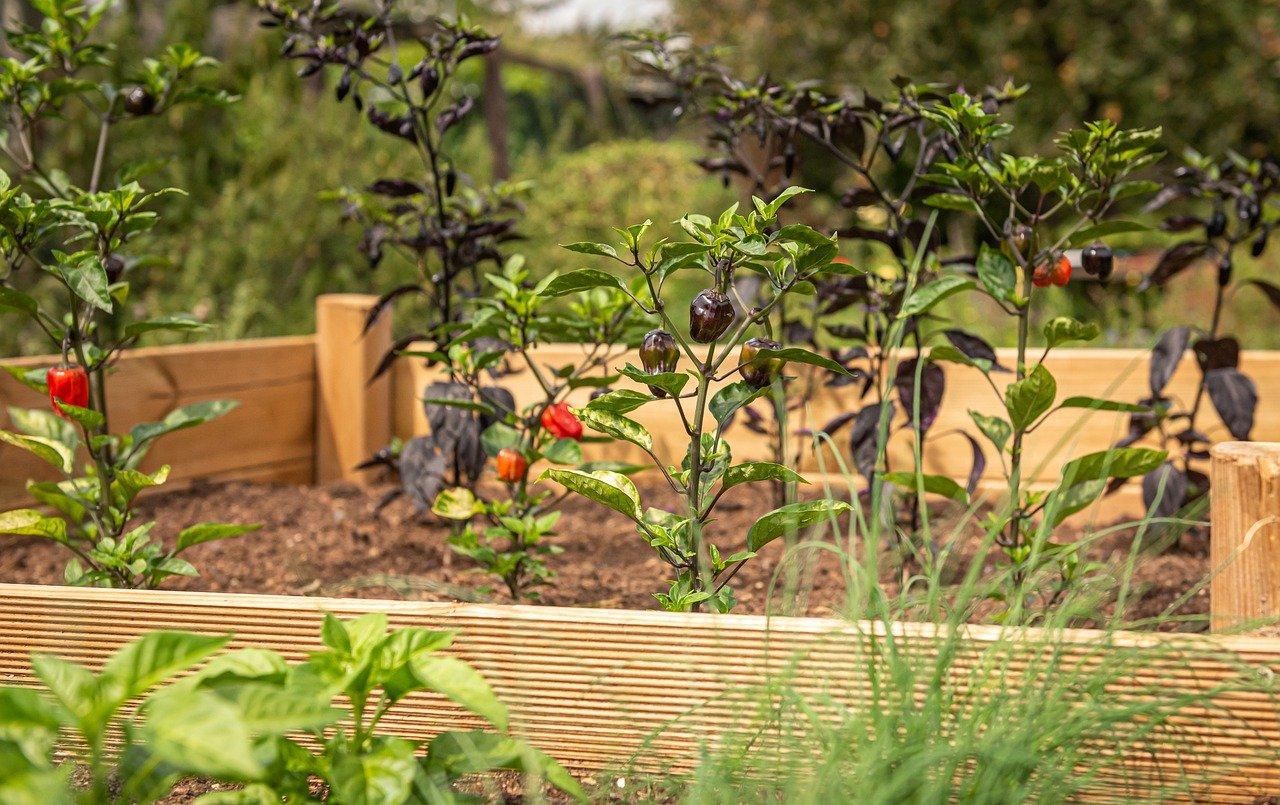 Hochbeete – Platz sparend Erträge im eigenen Garten steigern